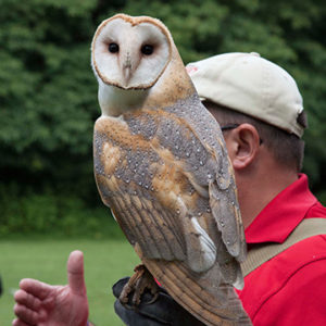 Owl at falconry photo shoot