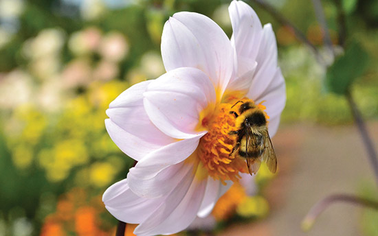 A bee doing meaningful work